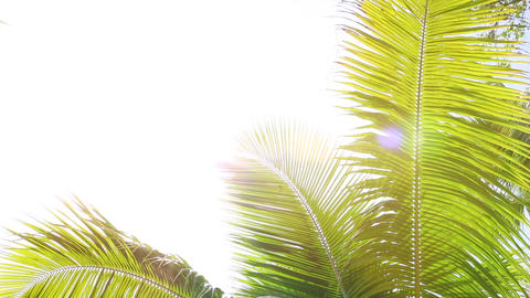 Tropical palm trees against the light, white space ビデオ
