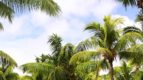 Tropical green palm trees with blue sky ビデオ