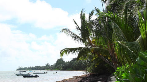Tropical beach of Anse Volbert, Praslin island, Seychelles Live Action