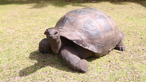 Giant tortoises at Curieuse Island, Seychelles Footage