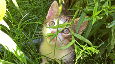 Baby Cat Playing In Grass Footage