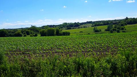 Camera Pan of Beautiful Lush Agricultural Farm Foliage. Summer Day Rural Countryside Farmland Footage