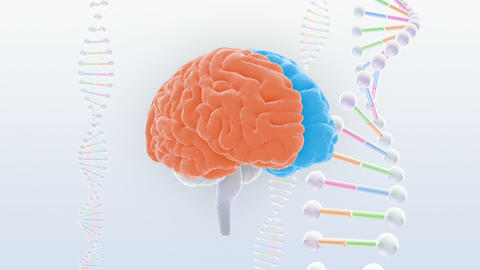 Brain Head 19 3 DNA D1bS2 4k CG動画