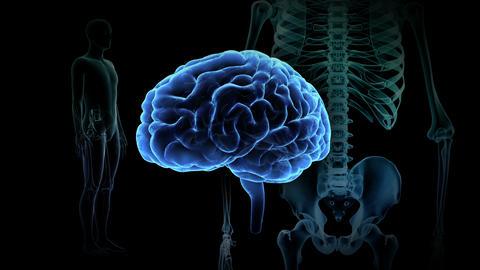 Brain Head 19 3 Medical A1bA1 4k Animation
