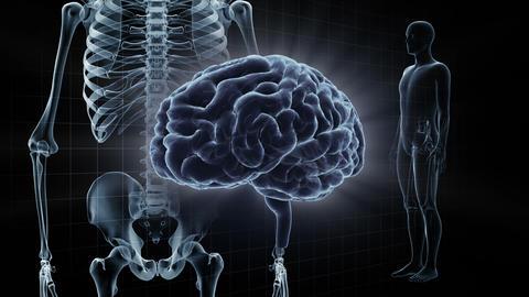 Brain Head 19 3 Medical A1gB 4k Animation