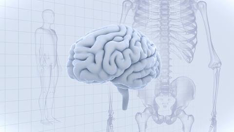 Brain Head 19 3 Medical A1gW 4k CG動画