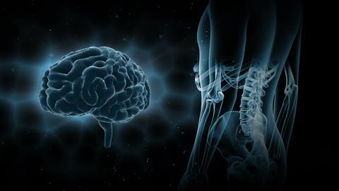 Brain Head 19 3 Medical A2bB 4k Videos animados