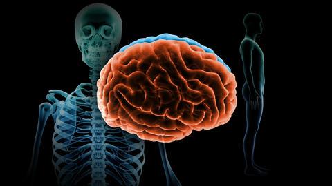 Brain Head 19 3 Medical B1bA5 4k CG動画
