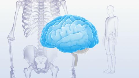 Brain Head 19 3 Medical C1bS2 4k CG動画