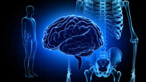 Brain Head 19 3 Medical C1dB 4k Animation