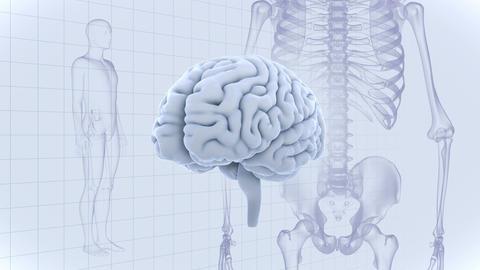Brain Head 19 3 Medical D1gW 4k Animation