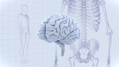 Brain Head 19 3 Medical D1gW 4k CG動画