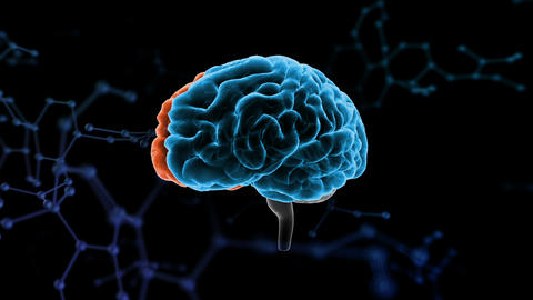 Brain Head 19 3 Molecular A1bA5 4k Animation