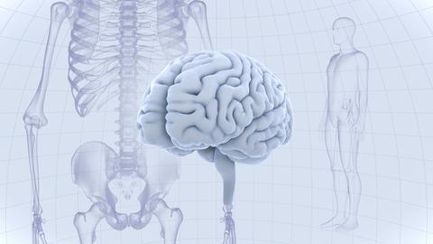 Brain Head 19 3 Medical D1dW 4k GIF