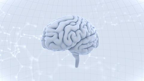 Brain Head 19 3 Molecular A1dW 4k GIF