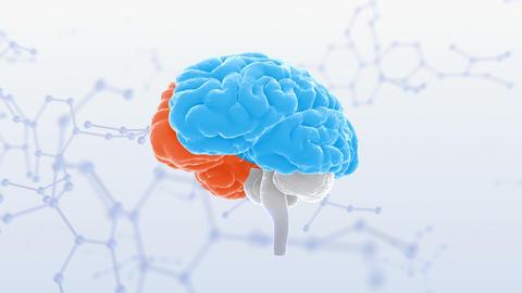Brain Head 19 3 Molecular B1bS2 4k CG動画