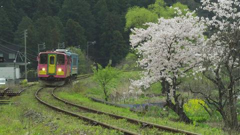 桜と樽見鉄道 木知原駅周辺 Footage