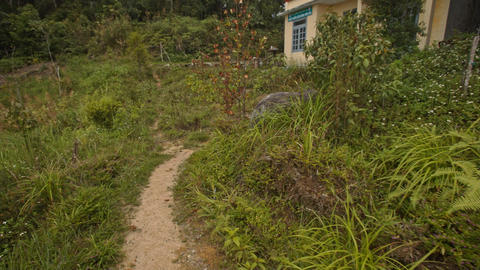Path among Plants with Stone Steps Leads to House Footage