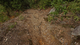 Camera Moves Down Path with Rare Stone Steps among Plants Footage