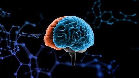 Brain Head 19 3 Molecular D1bA5 4k Animation