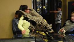 Stygimoloch spinifer dinosaur skull in Berlin natural history museum Footage