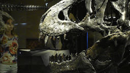 A woman comes closer to watch a giant head of tyrannosayrus rex skull in Berlin natural history Footage