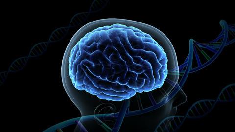 Brain Head 19 3 DNA B1bA3 4k CG動画