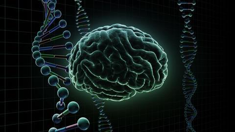 Brain Head 19 3 DNA B1gD 4k Animation