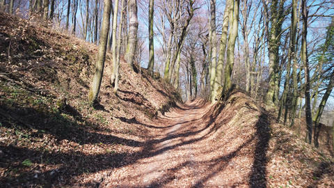 Walking in the Wooded Forest in the Middle of the Day - Spring, Hungary Footage
