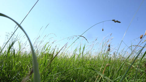 Meadow with tall grass pov Footage