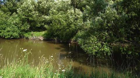 River with meadow and flowers in summer Footage