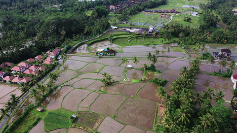 Aerial view of rice field. Terraced rice and field farm in the mountain Footage