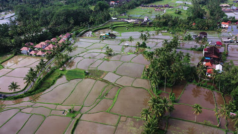 Aerial view of rice field. Terraced rice and field farm... Stock Video Footage