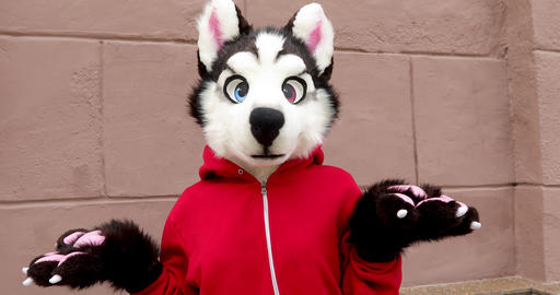 Person dressed as husky dog in street Footage