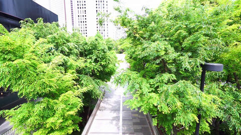 The fresh green of the tree-lined street (pedestrian High Angle) Footage