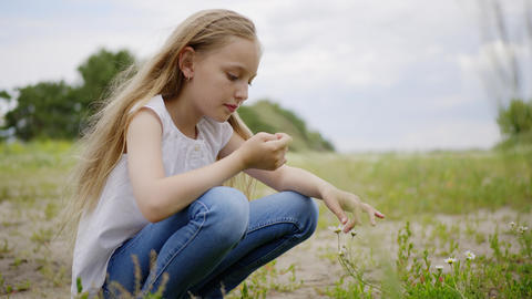 Teenager girl plucking daisy on summer lawn. Young girl picking meadow camomile Footage