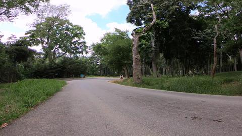 Beautiful Park View ビデオ