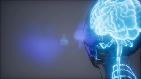 Human Brain Radiology Exam Live Action