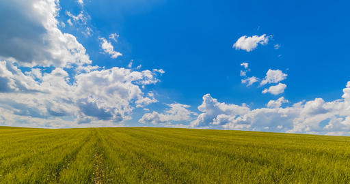 landscape of green grass fields under blue sky with white clouds, time-lapse movement, nature and Footage