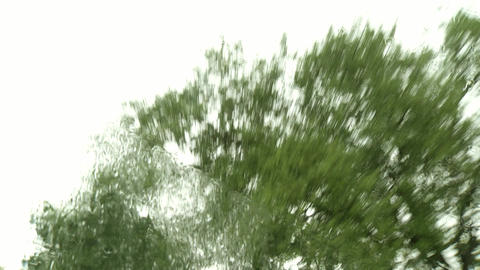 Rain time Green Forest Trees Against Blue Sky. Looking Up From Car Window Footage