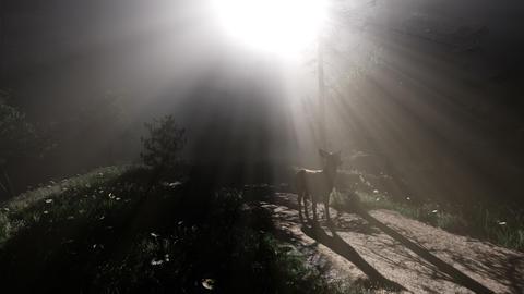 Deer Female in Forest in Fog Footage