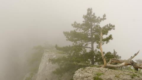 Trees on mountain peak in misty haze. Landscape fog covered mountain peak and Live Action