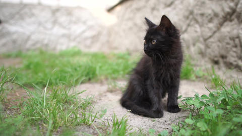 Cute black kitten going in a spacious yard on a sunny day in summer in slo-mo Live Action