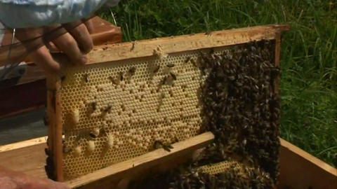 Bees in the hive 2 Stock Video Footage