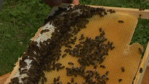 Bees in the hive 4 Stock Video Footage