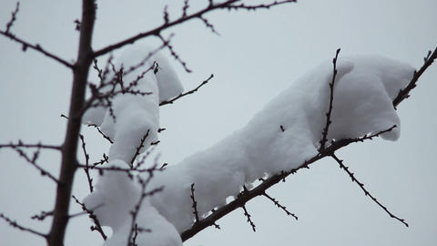 Snow on the branches 2 Stock Video Footage