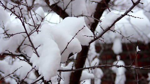 Snow on the branches 4 Stock Video Footage