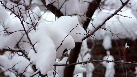 Snow on the branches 4 Footage