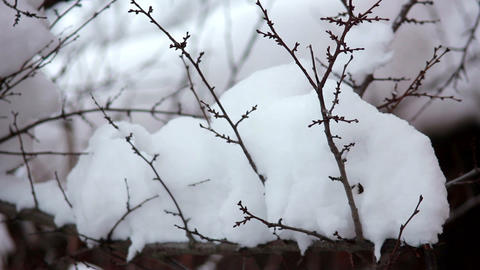 Snow on the branches 6 Stock Video Footage