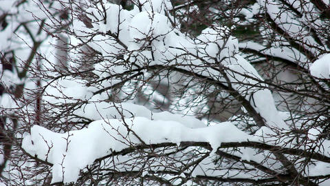 Snow on the branches 8 Stock Video Footage